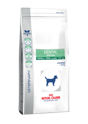 Veterinary Dog Dental Small Dog