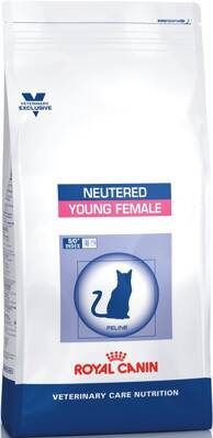 Veterinary Care Cat Neutered Young Female